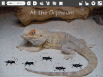 "View ""Crickets at the Orpheum Museum"" Etoys Project"
